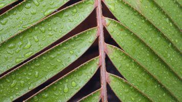 Фото бесплатно природа, листья, макрофотография