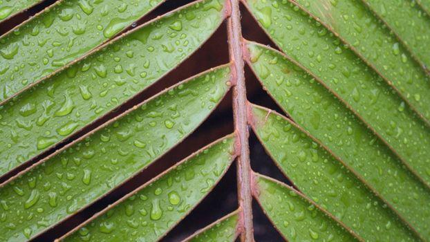 Photo free nature, leaves, closeup