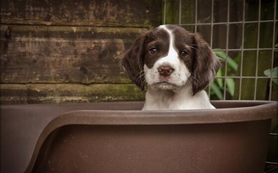 Фото бесплатно сидя, собака, щенок
