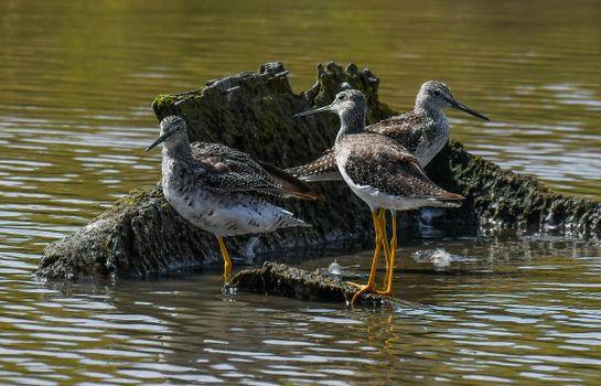 Фото бесплатно птицы и вода, клюв, птицы