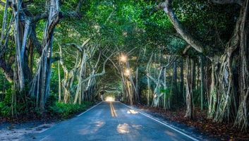 Photo free Florida, Tunnel of trees, road