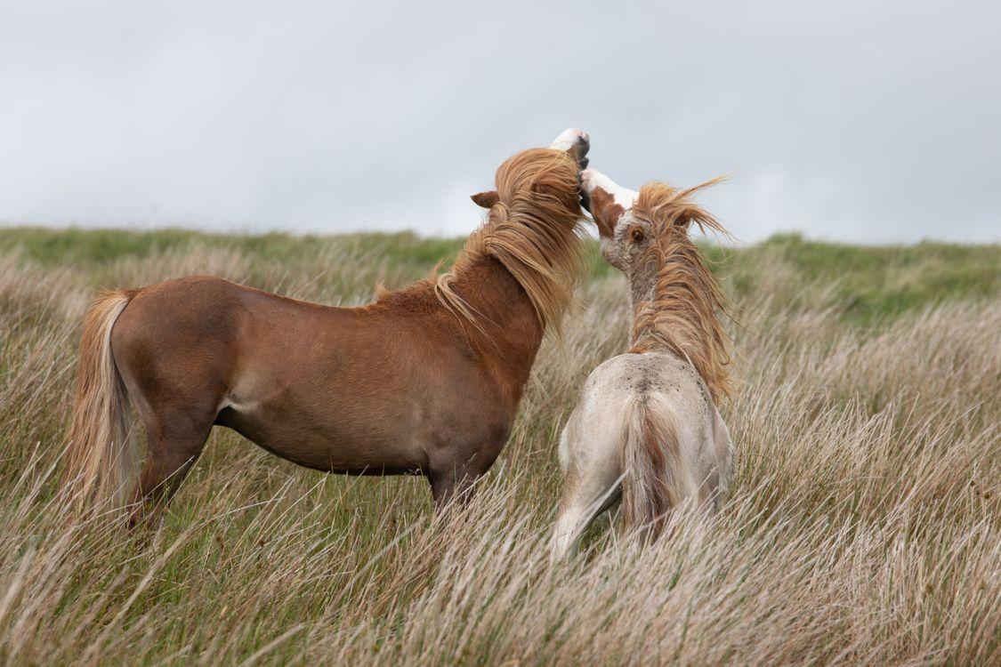 Фото животное пони лошади - бесплатные картинки на Fonwall