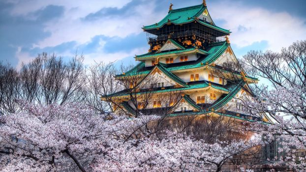 Photo free asian temple, cherry, temple