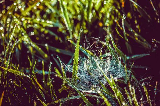 Photo free morning, cobweb, ground