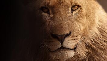 Фото бесплатно животное, дикая природа, мех