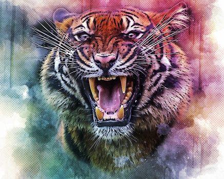 Photo free tiger, big cat, snarl