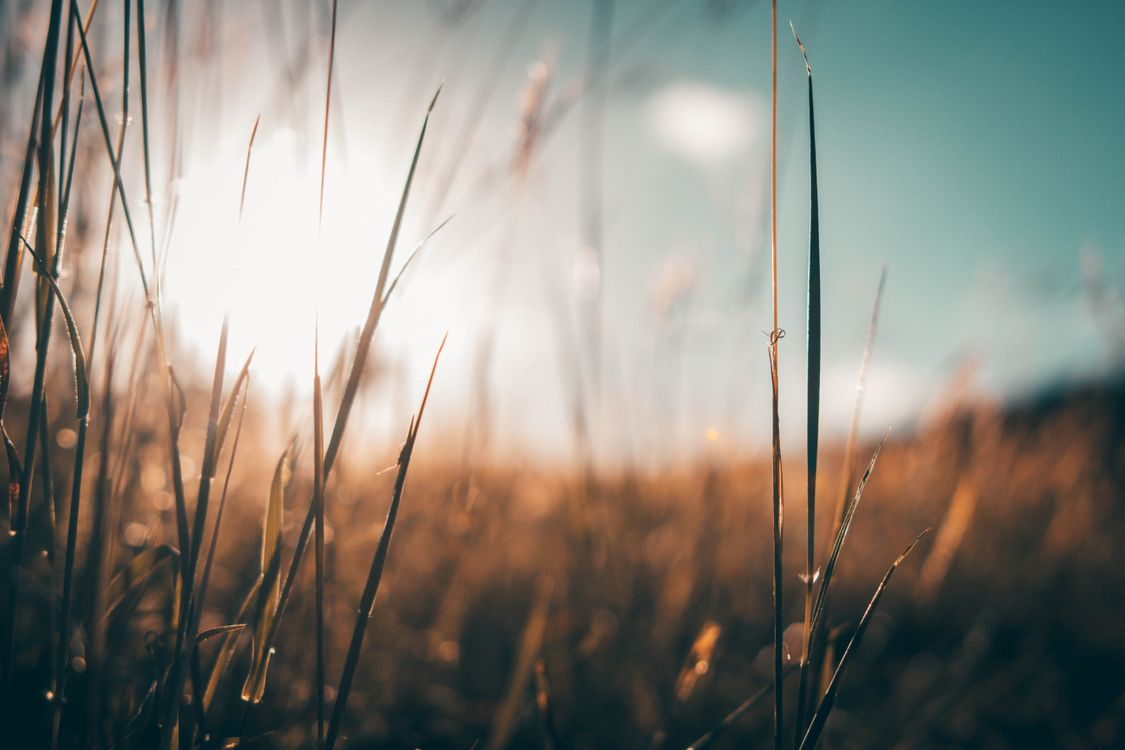 Фото бесплатно фон, текстура, вспышка объектива, восход солнца, макро, природа, поле, трава, солнечный свет, st croix, макро