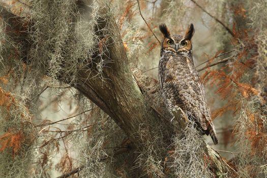 Photo free owl, old tree, wildlife