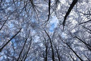 Бесплатные фото деревья,зима,иней,небо,вид снизу,trees,winter