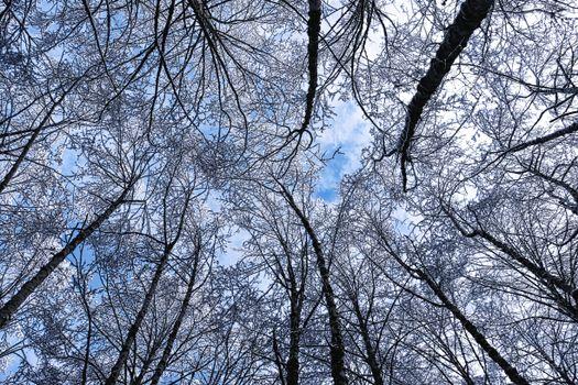 деревья, зима, иней, небо, вид снизу