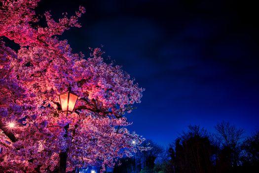 Фото бесплатно ночь, фонарь, дерево