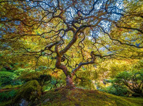Фото бесплатно США, сады сша, ветви
