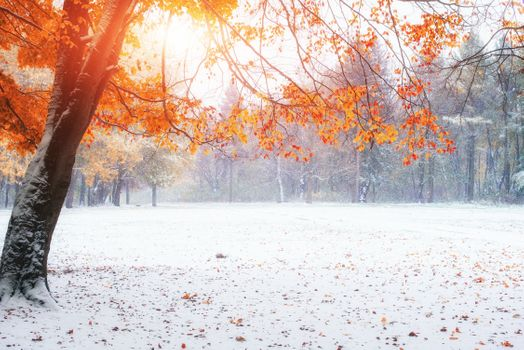 Заставки поздняя осень, зима, листья
