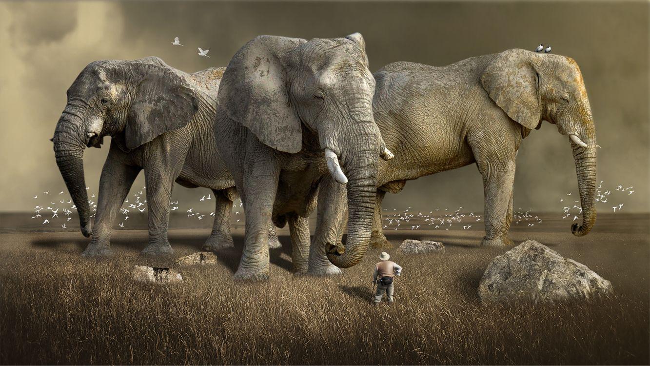 Фото бесплатно южная африка, safari, дикая природа, живая природа, слоны, гигантские слоны, art, животные