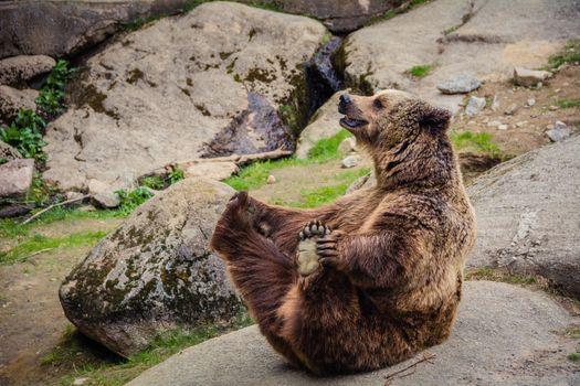 Фото бесплатно медведь, весело, скалы