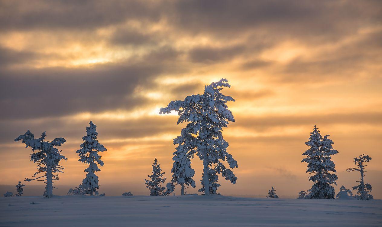 Фото бесплатно Finland, Lapland, Финляндия, Лапландия, зима, снег, деревья, закат, пейзаж, пейзажи