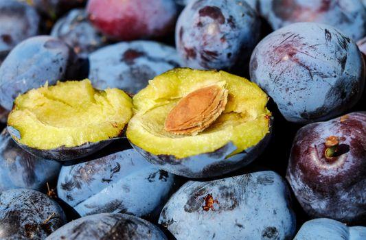 Photo free plant, fruits, stone