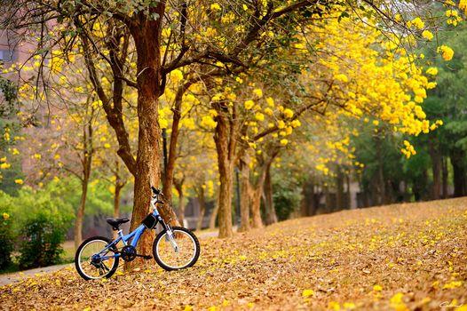 Фото бесплатно листья, байк, осень