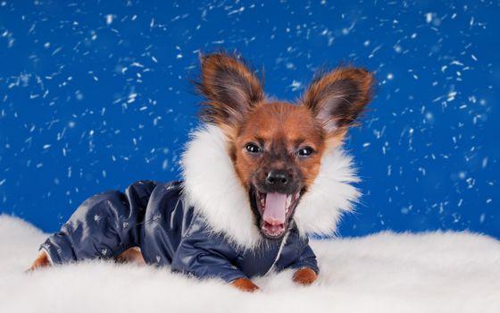 Photo free puppy, pozvonochnye, snow