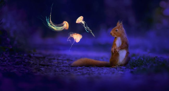Заставки ночь, животных, медуза