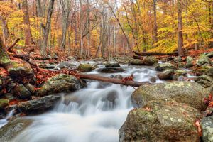 Заставки осень, лес, деревья, камни, река, течение, пейзаж