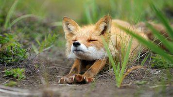 Фото бесплатно цифровое искусство, животные, трава
