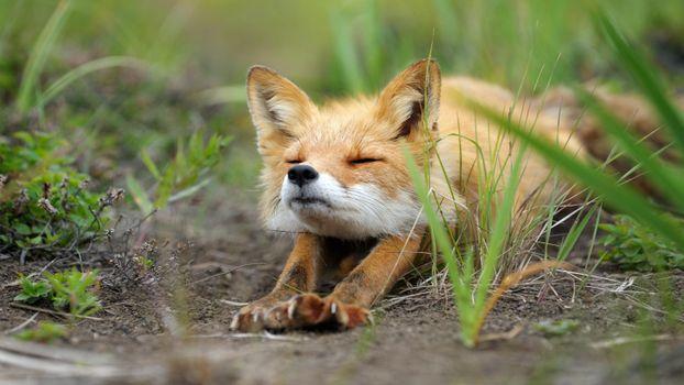 Photo free digital art, animals, grass