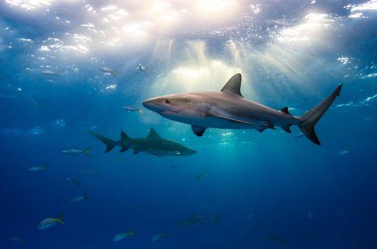 Заставка акулы, море на андроид