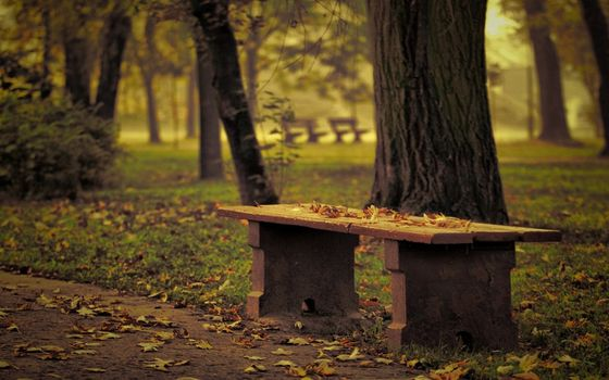 Photo free tree, leaves, bench