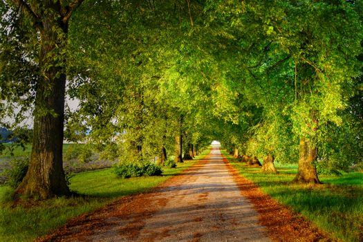 Photo free alley, summer, landscape