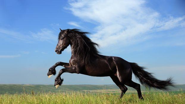 Photo free jump, black, horse