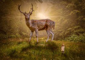 Бесплатные фото лес,поляна,олень,гигантский олень,девочка,ребёнок,закат