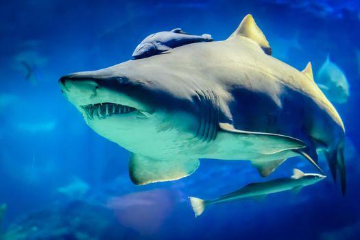 Картинка акула, море на рабочий стол