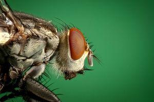 Photo free close-up, mole, organism