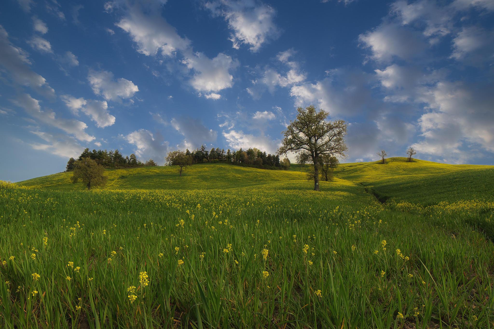 Обои поле, цветы, холмы, деревья