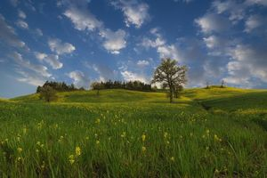 Бесплатные фото поле,цветы,холмы,деревья,пейзаж