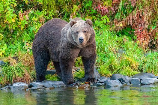 Photo free brown bear, predator, beast