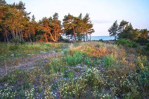 Бесплатные фото море,берег,деревья,цветы,пейзаж