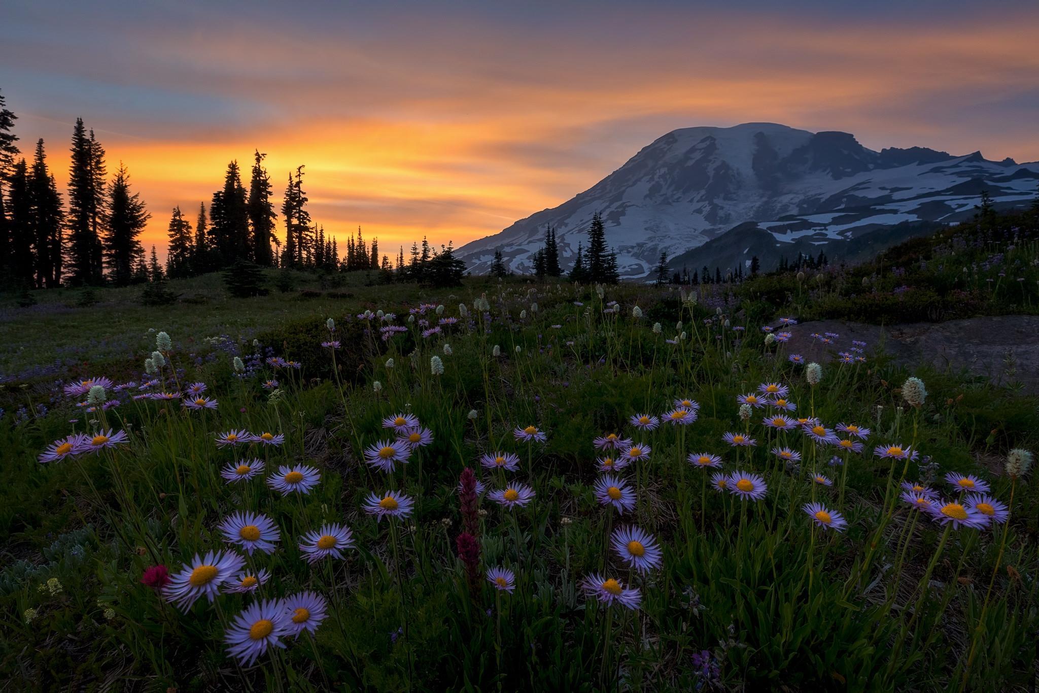 Обои Mount Rainier National Park, Washington, Альпийский луг, закат