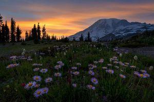 Фото бесплатно закат, альпийский луг, цветы