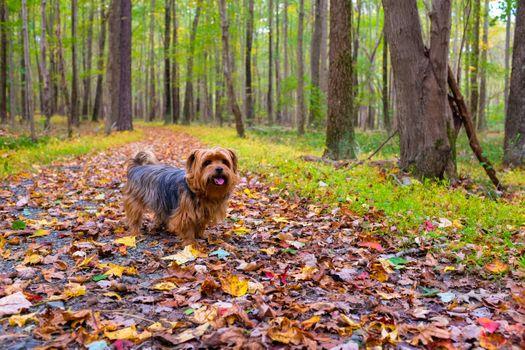 Фото бесплатно щенок, осень, листья