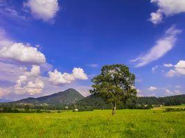 Обои Смарна-Гора, Пресшки, Медвода, Словения, поле, дерево, пейзаж