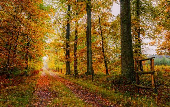 Заставки осень, дорога, деревья