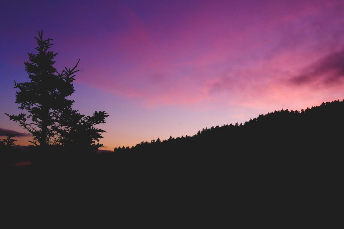 Закат и силуэт елки · бесплатное фото