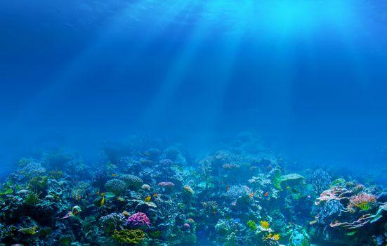 Фото бесплатно кораллы, подводный мир, рыбки