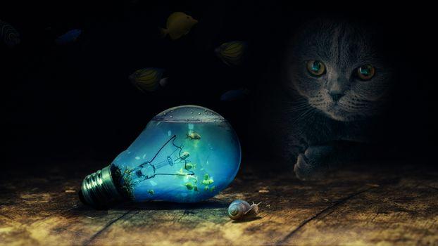 Photo free cat, aquarium, fish