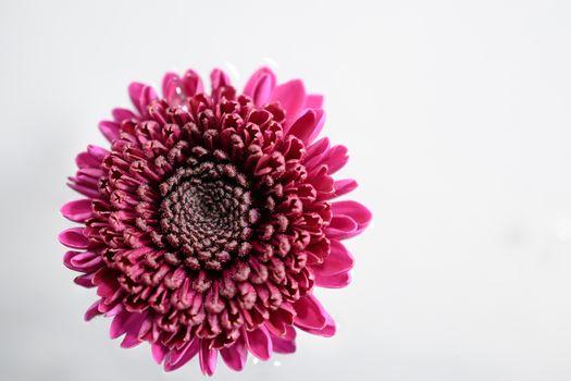 Photo free macro, petals, pink flower