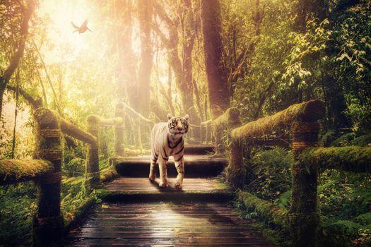 Photo free jungle, white tiger, sunshine