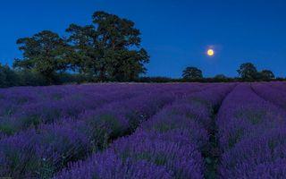 Бесплатные фото ночь,луна,поле,лаванда,пейзаж
