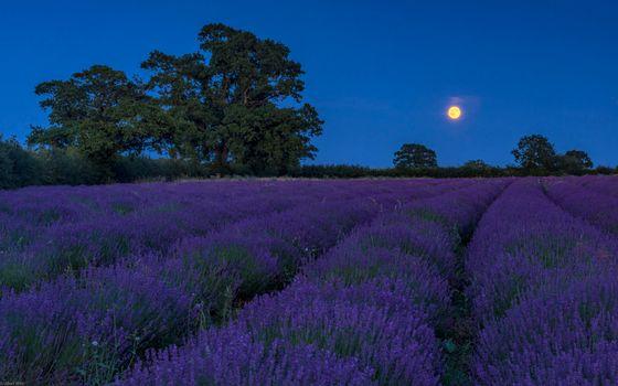 Заставки ночь, луна, поле